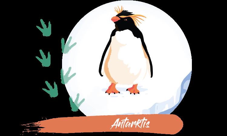 Felsenpinguin Antarktis