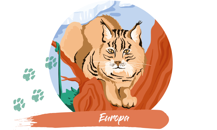 Luchs Europa
