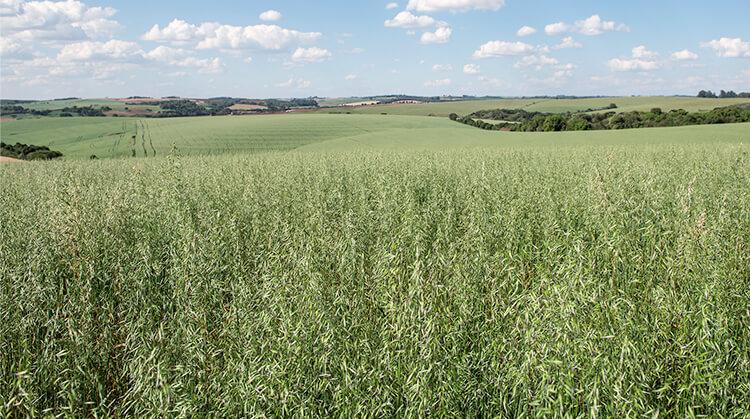 Biologischer Getreideanbau für höchste Qualität