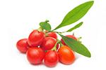Gojibeeren gelten als Superfruit und sollen sich positiv auf die Gesundheit auswirken