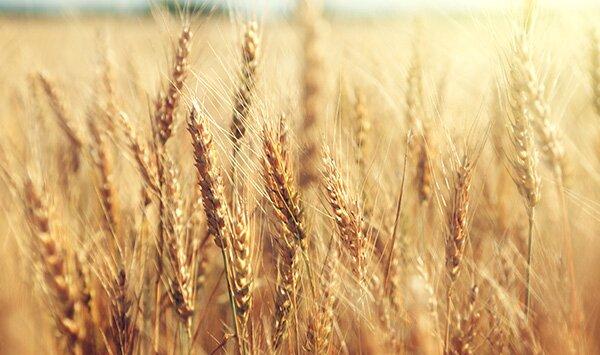 Ein eigenes Bio-Müsli für besondere Getreidesorten.