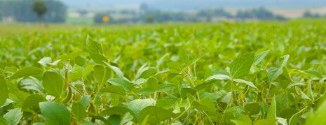 Anbau der Soja-Flocken für Low-Carb-Müsli